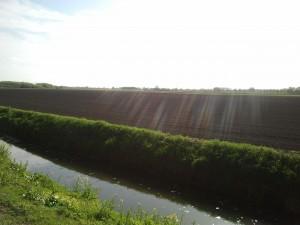 polder bij Nieuwendijk